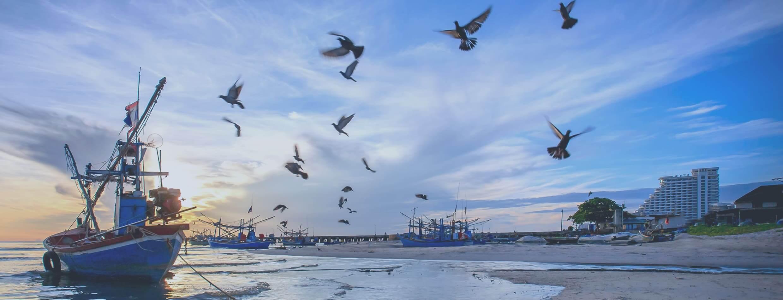 JFO日本漁師協会 漁師が経営者になり市場を動かす世界へ